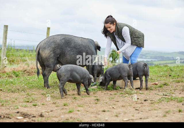 pig farmer stockfotos pig farmer bilder alamy. Black Bedroom Furniture Sets. Home Design Ideas