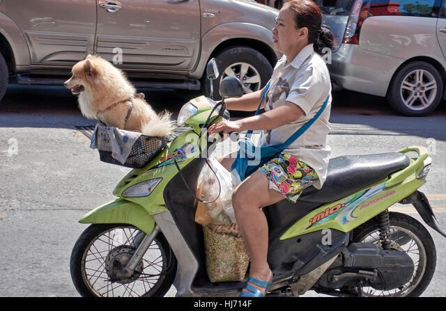 motorcycle dog stockfotos motorcycle dog bilder alamy. Black Bedroom Furniture Sets. Home Design Ideas