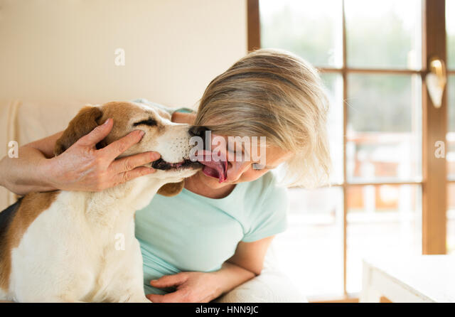 dog licking woman stockfotos dog licking woman bilder alamy. Black Bedroom Furniture Sets. Home Design Ideas