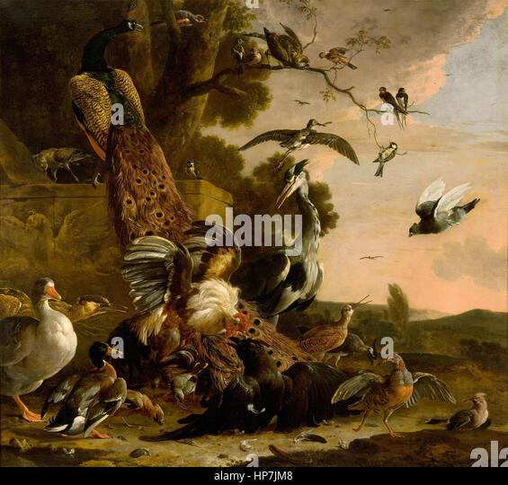 Hondecoeter Melchior Stockfotos & Hondecoeter Melchior Bilder - Alamy