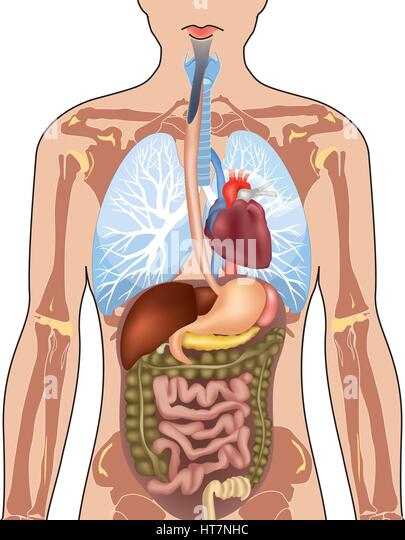 Picture of female body showing organs