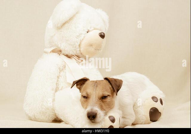 tapete zoo hund teddy - photo #21