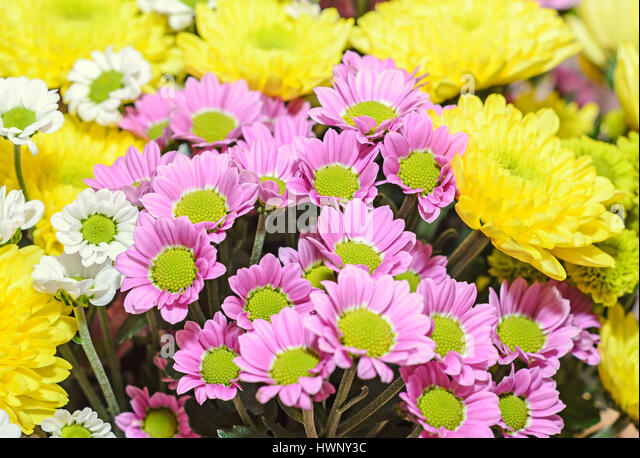 flower arrangement chrysanthemums stockfotos flower arrangement chrysanthemums bilder alamy. Black Bedroom Furniture Sets. Home Design Ideas