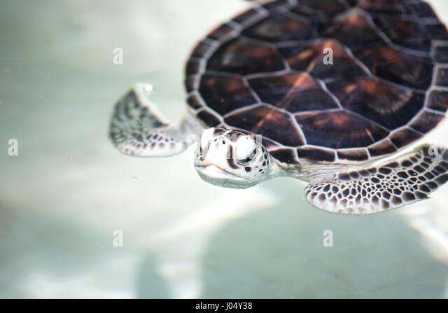 Ungewöhnlich Nemo Meeresschildkröte Färbung Seite Galerie - Beispiel ...