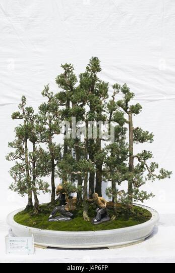 small conifers stockfotos small conifers bilder alamy. Black Bedroom Furniture Sets. Home Design Ideas