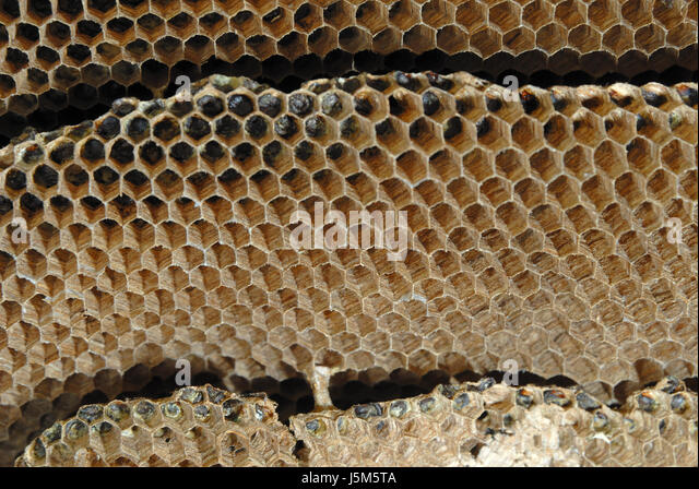 cellulose cell stockfotos cellulose cell bilder alamy. Black Bedroom Furniture Sets. Home Design Ideas