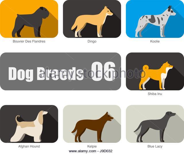 Beste Hund Gesicht Färbung Seite Fotos - Beispielzusammenfassung ...