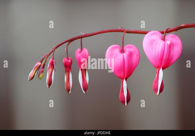 heart shape border flora stockfotos heart shape border flora bilder alamy. Black Bedroom Furniture Sets. Home Design Ideas