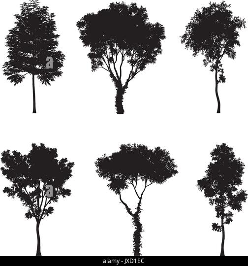 pine tree isolated icon vector stockfotos pine tree isolated icon vector bilder alamy. Black Bedroom Furniture Sets. Home Design Ideas