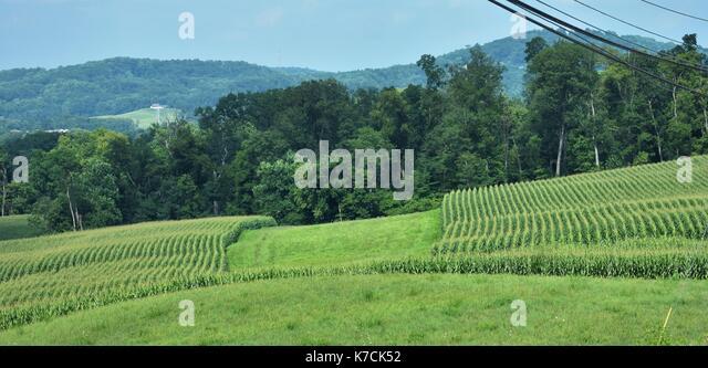 Pennsylvania Scenic Ackerland Landschaft Stockbild