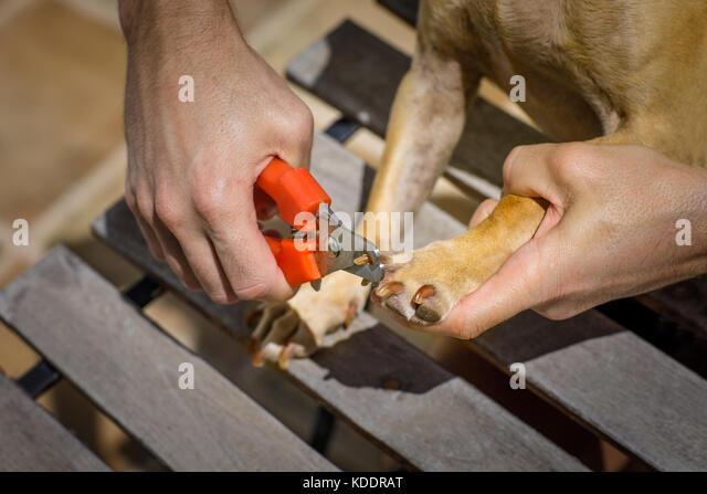 Sharp Claw Claws Stockfotos U0026 Sharp Claw Claws Bilder - Alamy