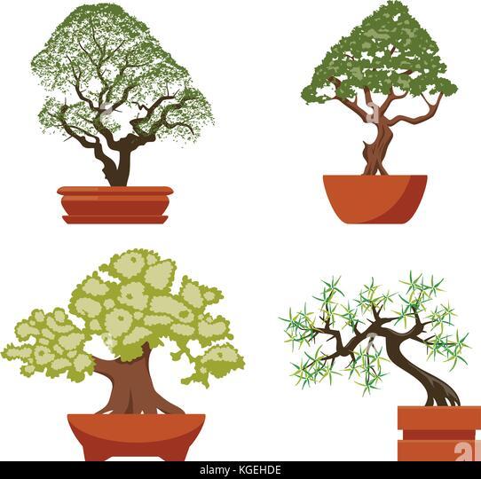 bonsai white stockfotos bonsai white bilder seite 2. Black Bedroom Furniture Sets. Home Design Ideas