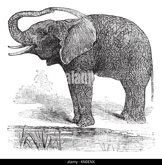 Fliesen Wildes Muster: Elephant Hunting Old Stockfotos & Elephant Hunting Old