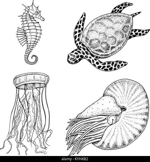 Niedlich Süße Meer Tier Malvorlagen Ideen - Ideen färben - blsbooks.com