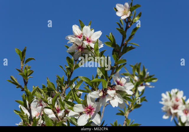 pink flowering flowers spain stockfotos pink flowering flowers spain bilder alamy. Black Bedroom Furniture Sets. Home Design Ideas