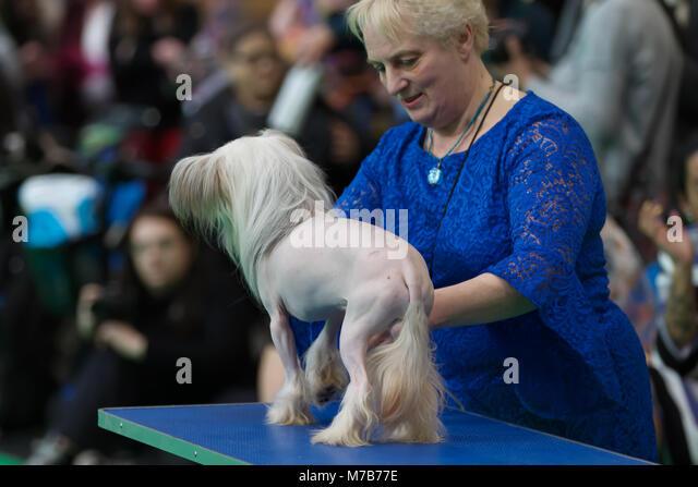 Bald chinese crested dog stockfotos