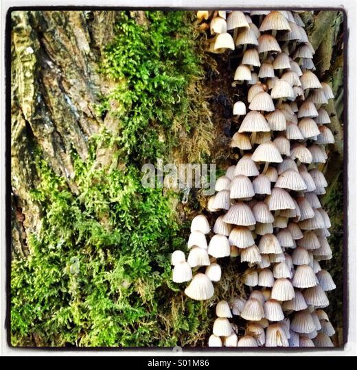 fungi stockfotos fungi bilder alamy. Black Bedroom Furniture Sets. Home Design Ideas