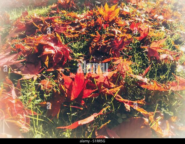 autumnal background stockfotos autumnal background. Black Bedroom Furniture Sets. Home Design Ideas