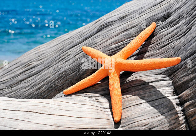 Primer Plano De Una Estrella Naranja Sobre Un Viejo Tronco De Rbol