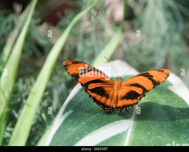 Brightly Coloured Wings Imágenes De Stock & Brightly Coloured Wings ...