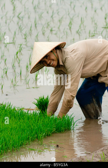 vietnam farmer at work photos vietnam farmer at work images alamy. Black Bedroom Furniture Sets. Home Design Ideas